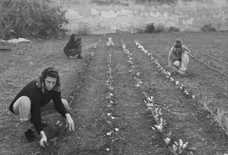 Dones llauren el futur parc agrari de Palma